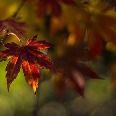 "фото ""Осенний пазл"""