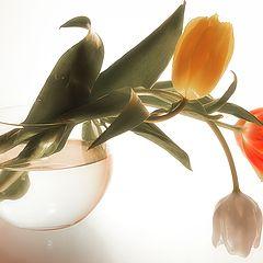 """фото """"Желание весны"""""""
