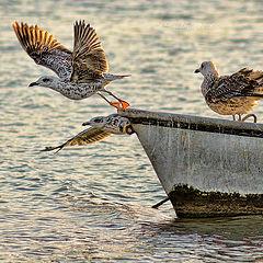 """photo """"A punto de volar"""""""