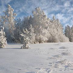 "фото ""Кружева морозного леса"""
