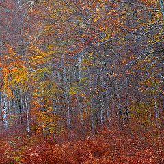 """photo """"couleur d'automne"""""""