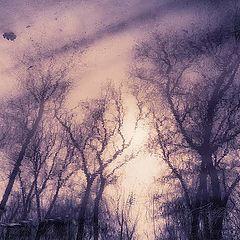 "фото ""Буря мглою небо кроет"""