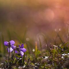 """фото """"Предчувствие весны"""""""