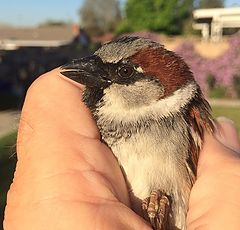 "photo ""Bird In The Hand"""