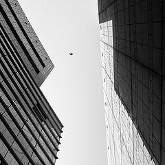 "фото ""Flight"""