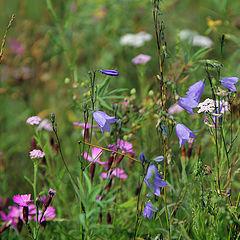 "photo ""Wild flowers"""