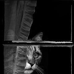 """фото """"Micio..."""""""