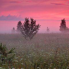 """фото """"В тумане"""""""