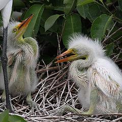 """фото """"Один маленький но гордый птичка сказал..."""""""