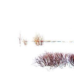 """фото """"Белый лист"""""""
