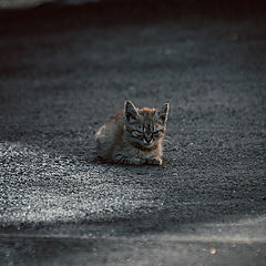 "photo ""small cat"""