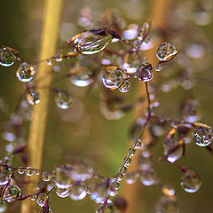 "фото ""Sunrise and dew ..."""