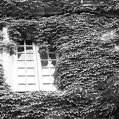 "photo ""the window"""