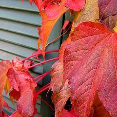 """photo """"colours of season"""""""