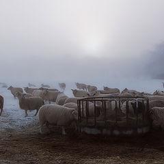 "фото ""Morning grazing"""