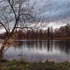 """фото """"С деревьев облетают птицы"""""""