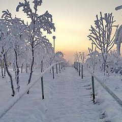 """фото """"Дорога в туман"""""""
