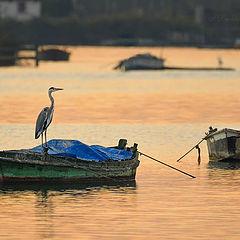 """photo """"El último pescador"""""""