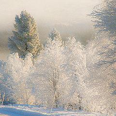 """фото """"Hoar-frost"""""""