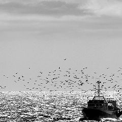 "photo ""seagulls and boat"""