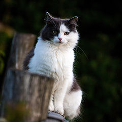 "photo ""country cat"""