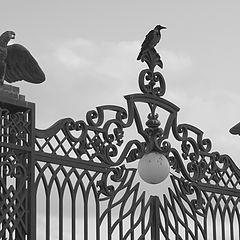 """фото """"гордые птицы"""""""