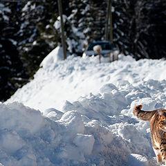"""photo """"Alpine cat"""""""