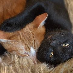 """photo """"Duerme, hermano"""""""