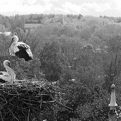 "photo ""Room overlooking the Nest"""