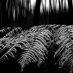 "photo ""fern"""
