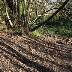 """фото """"Полосатый пес в полосатом лесу"""""""