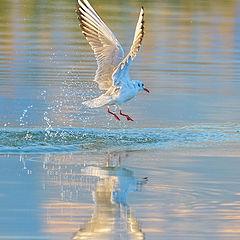 """photo """"Baile sobre el agua"""""""