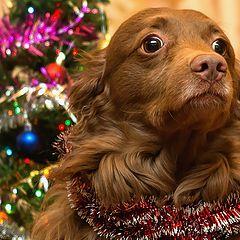 """фото """"Всех с наступающим Новым годом! Годом пса!"""""""