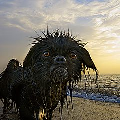 "фото ""Морской волк"""