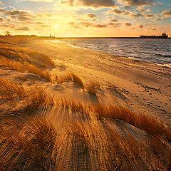 """фото """"Солнечный ветер"""""""
