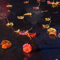 """photo """"После дождя."""""""