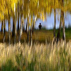"""фото """"У реки в тени деревьев"""""""