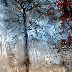 "photo ""Window in winter"""
