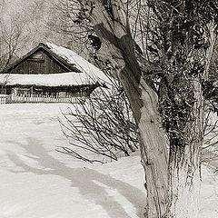 """фото """"Старое дерево"""""""