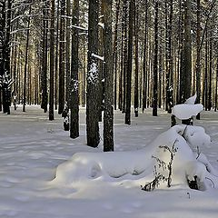 """фото """"Снежные зарисовки в лесу. Творит природа."""""""