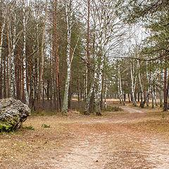 """фото """"В зимнем январском лесу."""""""