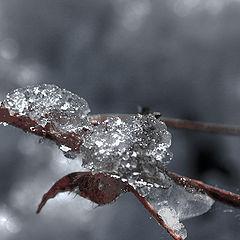 """фото """"Wet snow"""""""