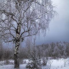 """фото """"В лесу родилась ёлочка..."""""""