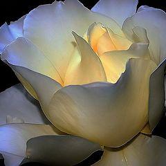 """photo """"A Rose..."""""""