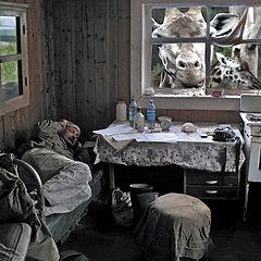 """фото """"беломорские сны лесника"""""""