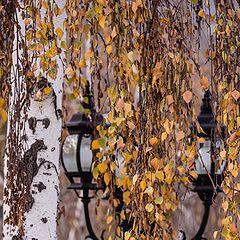 """photo """"Осень"""""""