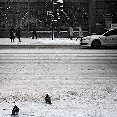 """фото """"Пешеходный переход"""""""