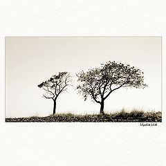 "photo ""two trees"""