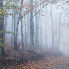 "фото ""Любование туманом"""