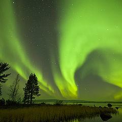 "фото ""Хозяин полярной ночи."""